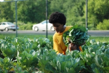 A volunteer from the Broad Street Ministry harvests crops at Carousel House, a Philadelphia recreation center.
