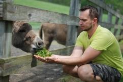 Donkey at Fox Chase Farm